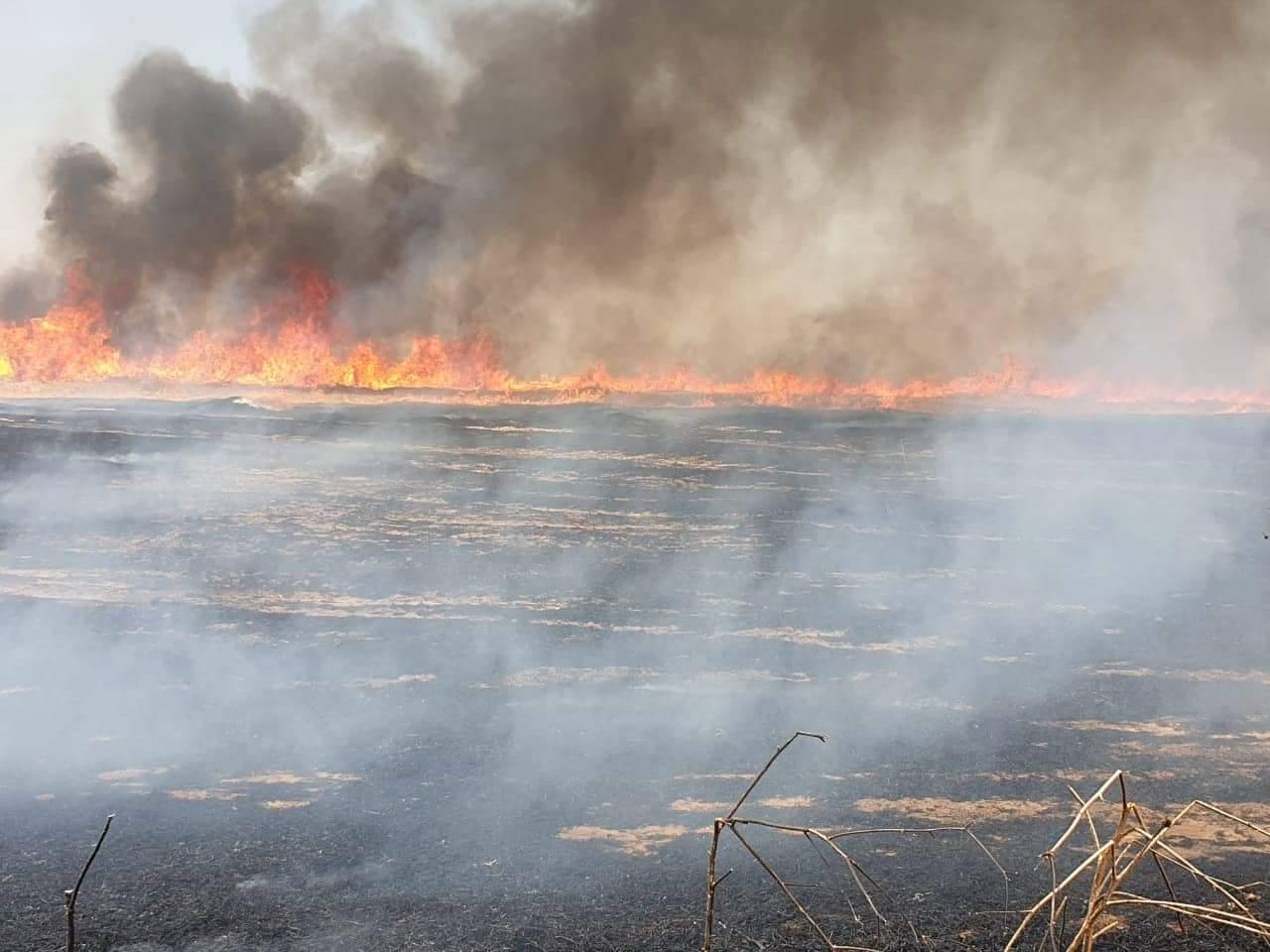 مصرع شرطي باندلاع حريق داخل حقل للحنطة شرقي الموصل
