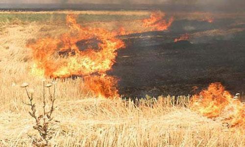 زراعة ديالى تعلن احصائية جديدة عن حرائق الحنطة